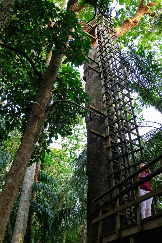 Tree House, Lekki Conservation Centre