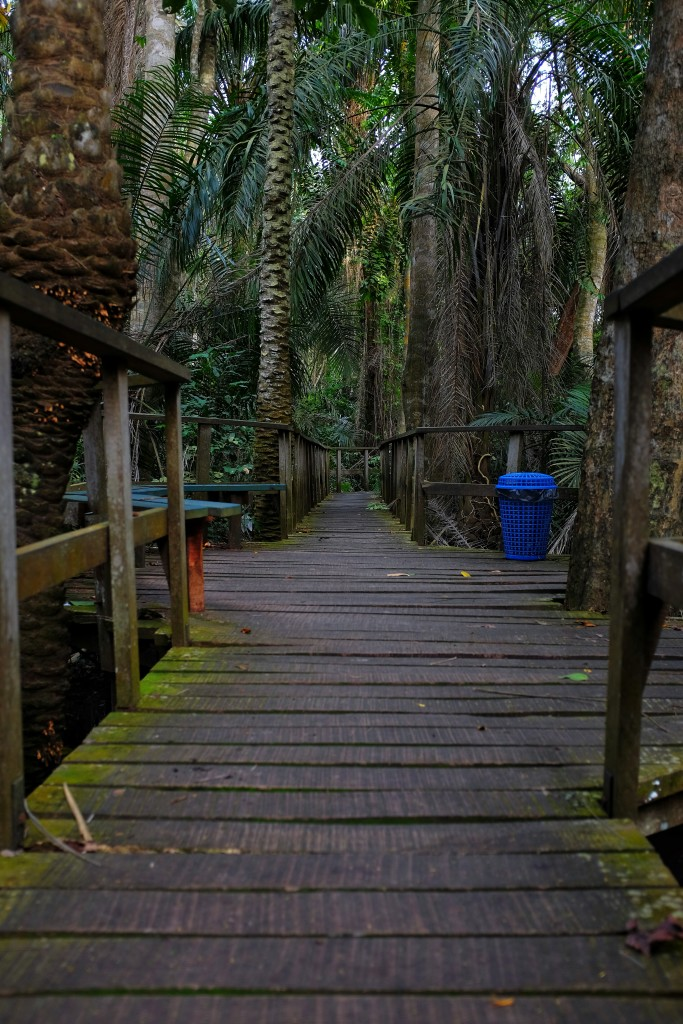 Trail near the tree house, Lekki Conservation Centre