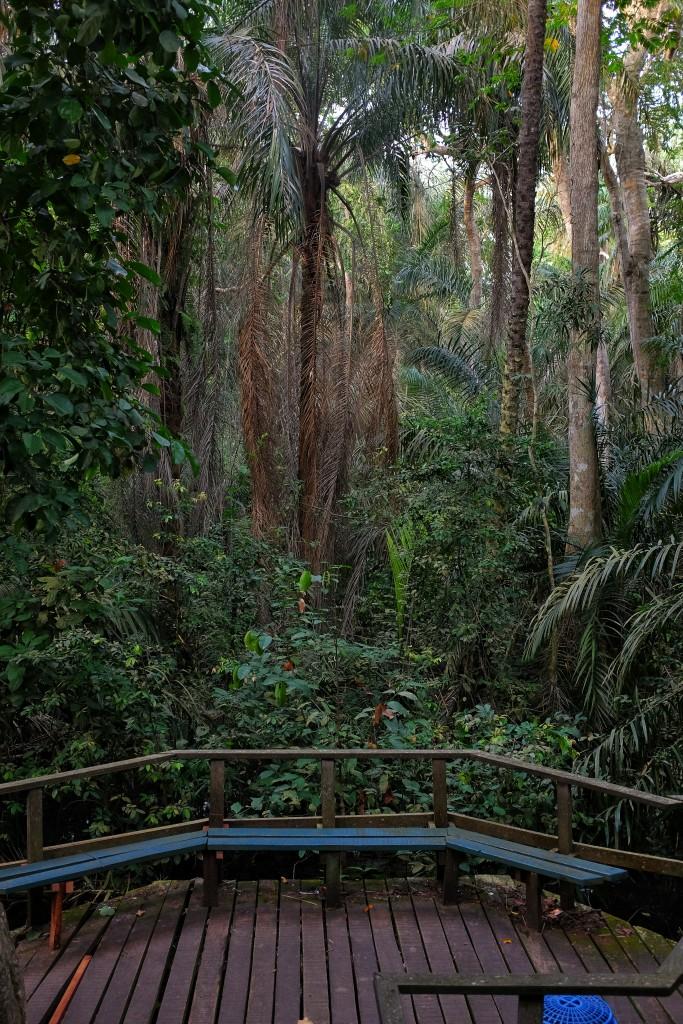 Trail, Lekki Conservation Centre