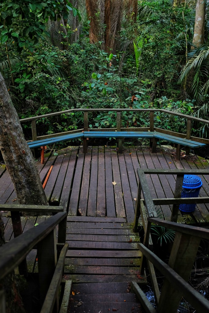 Stairs down the tree house, Lekki Conservation Centre