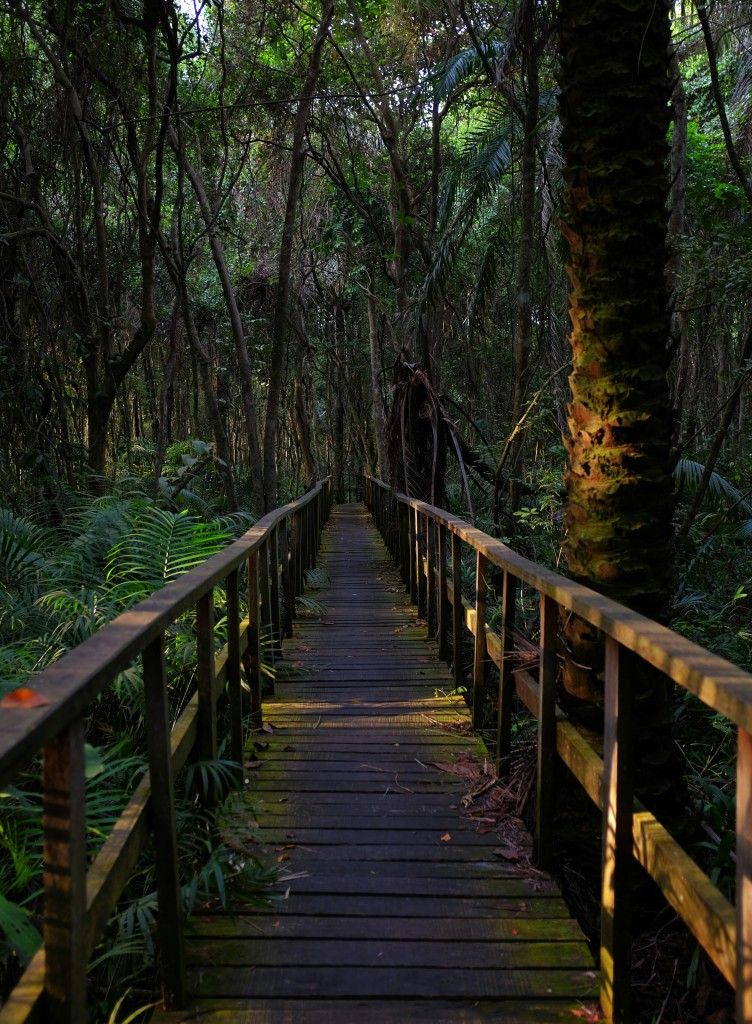 Trail at the Lekki Conservation Centre