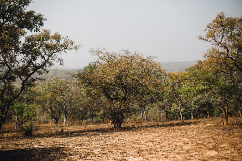 Tree, Awhum Waterfall and Cave, Enugu