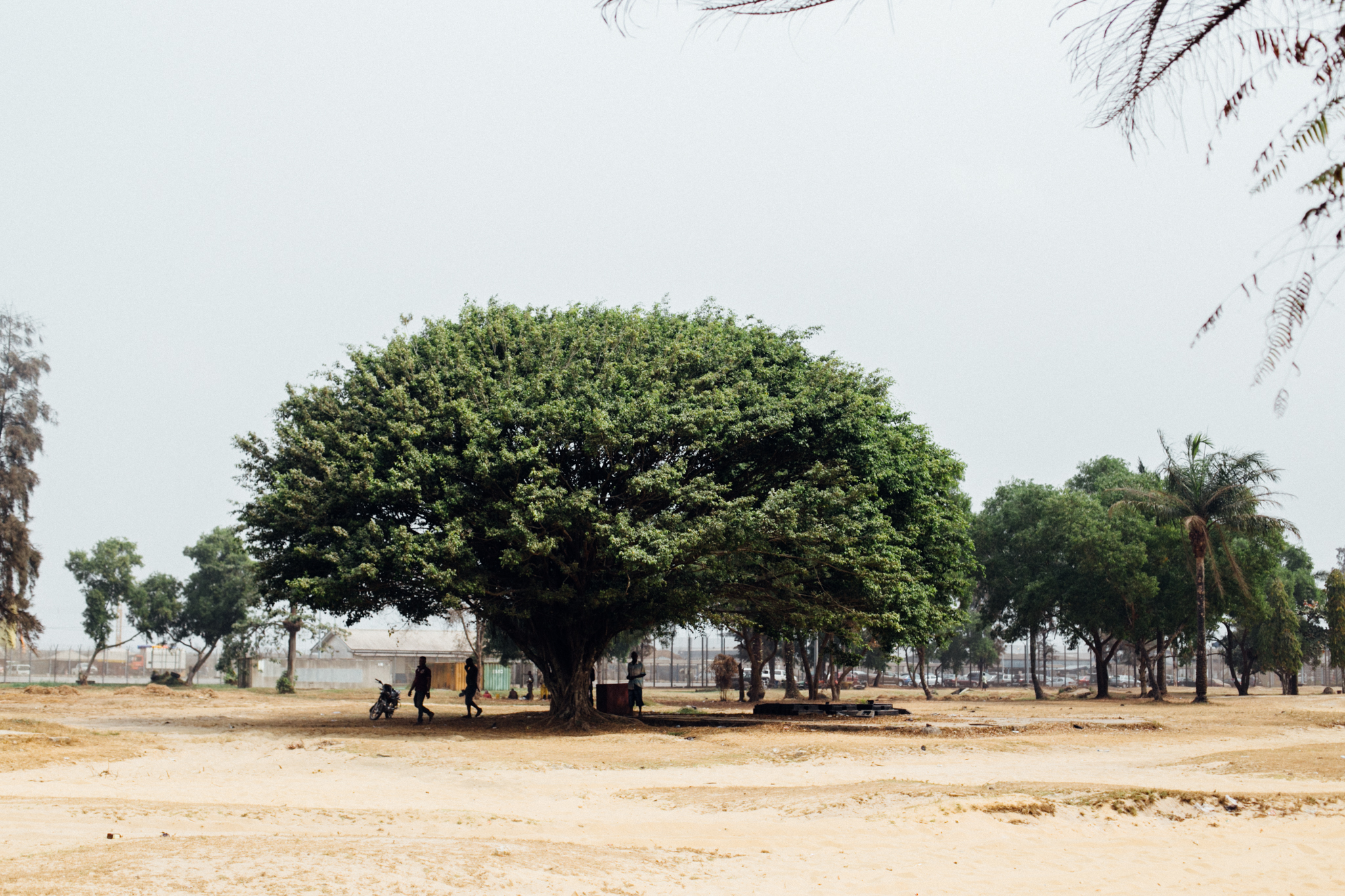 Trees, Ibeno Beach
