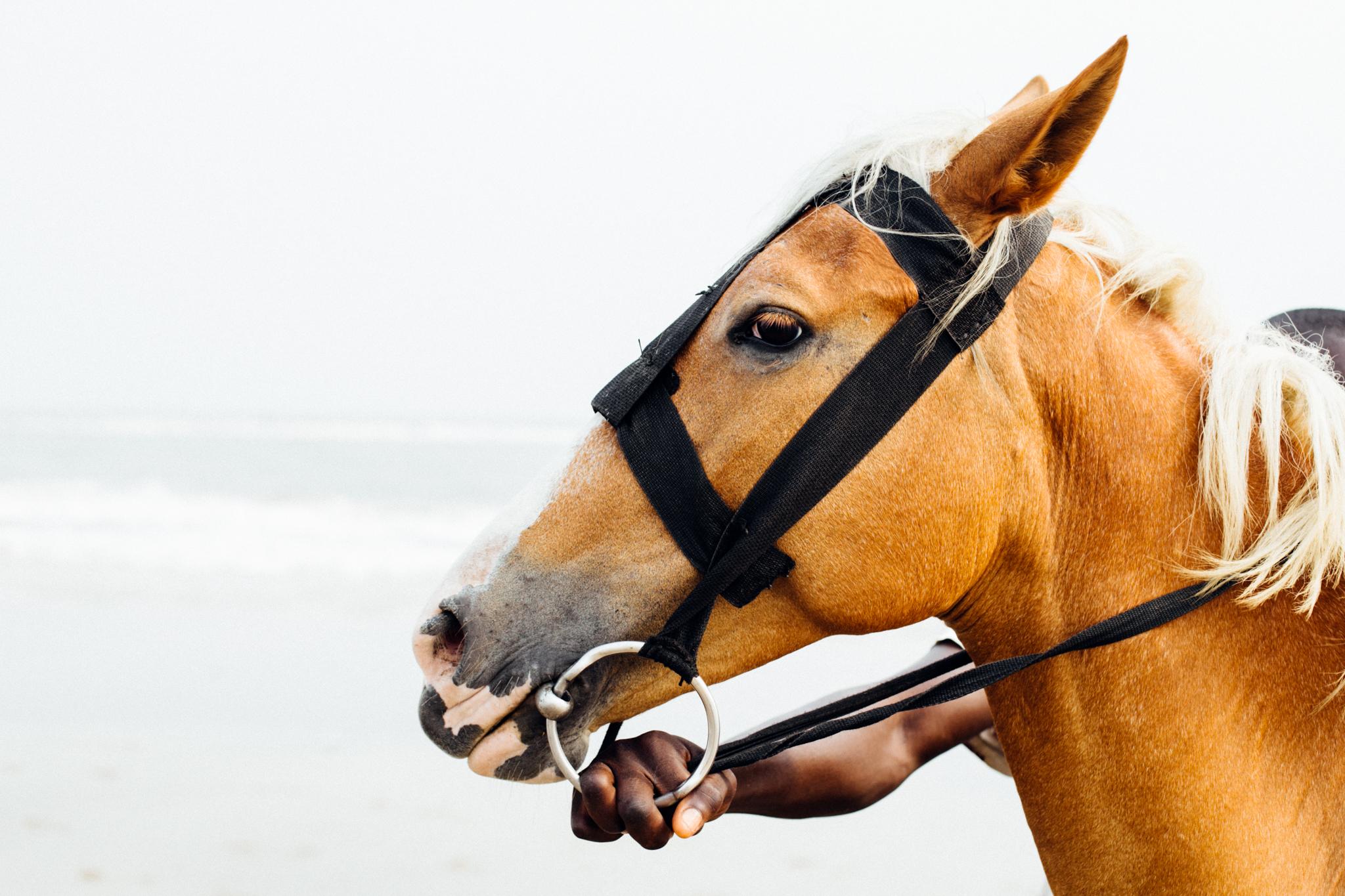 Horse, Ibeno Beach