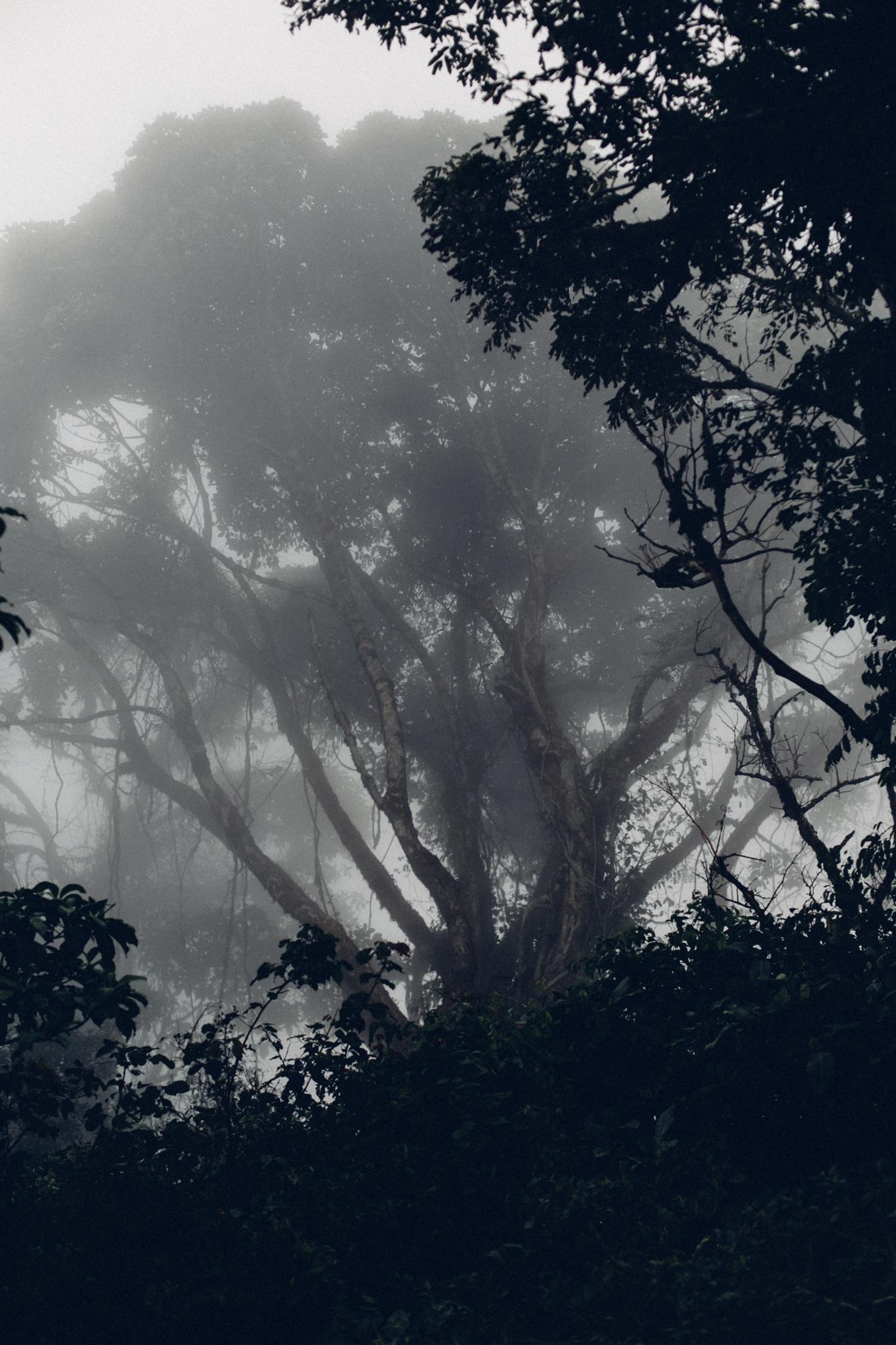 Foggy trees, Obudu