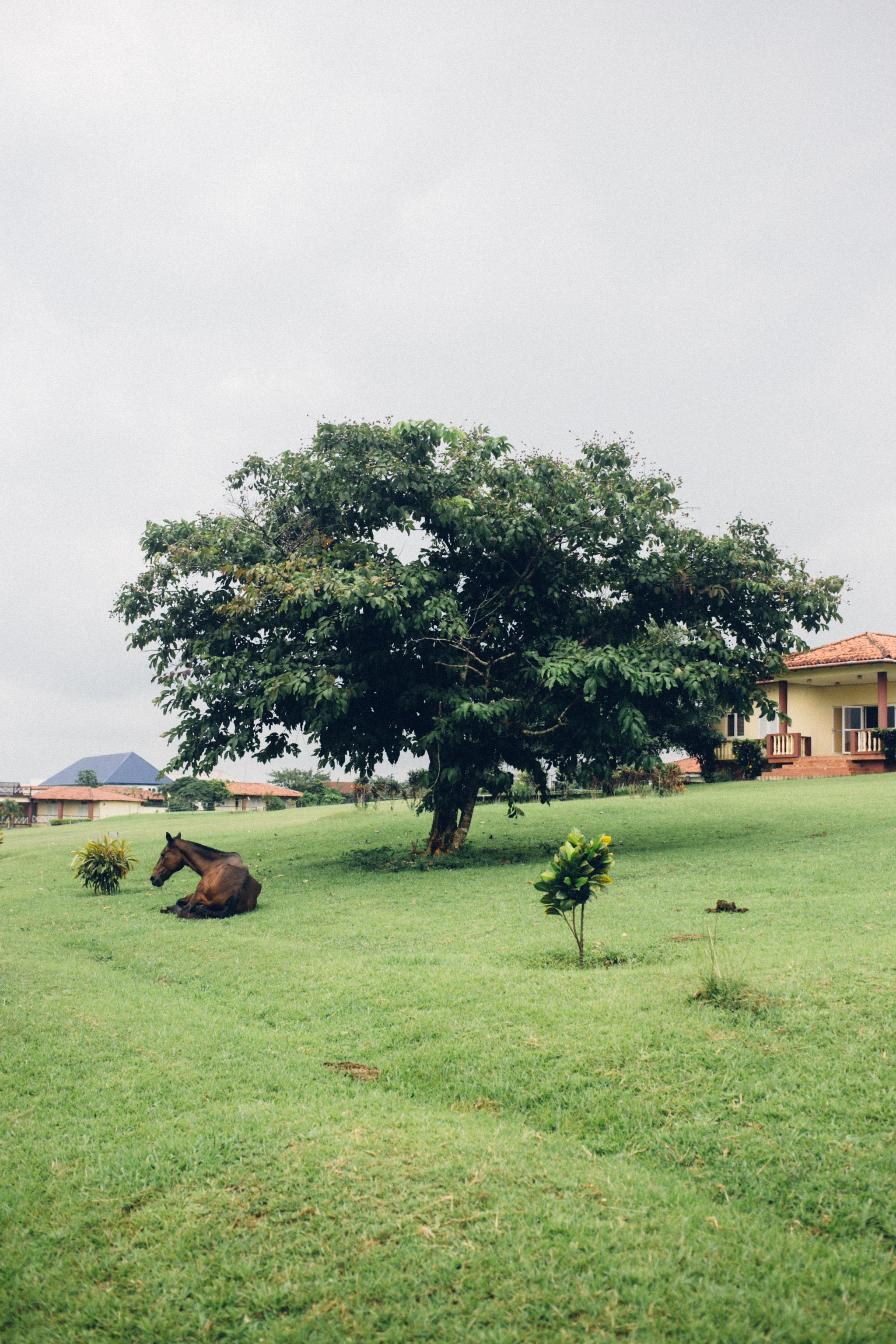 Horses, Abraka Turf and Country Club