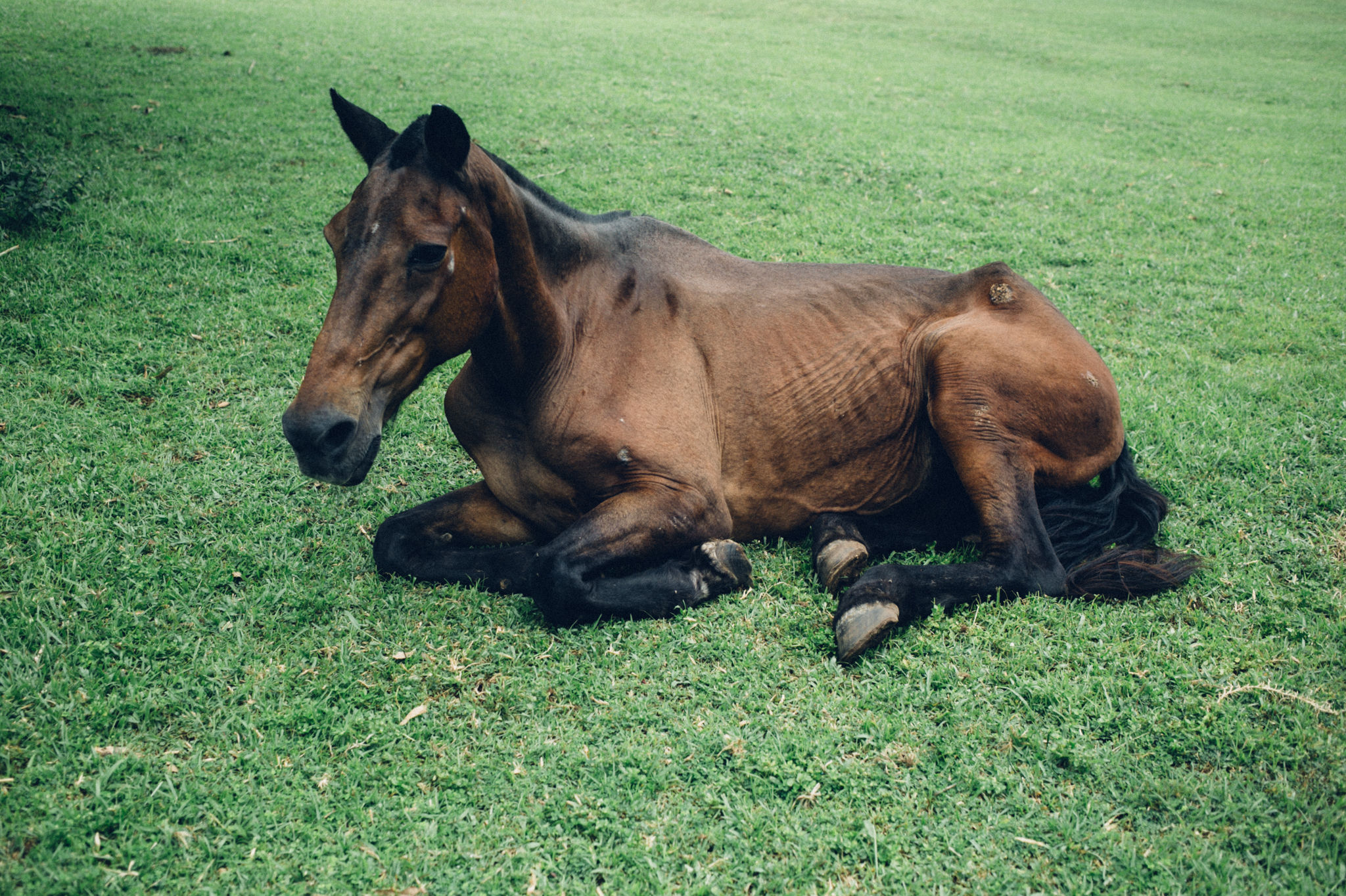 Horse, Abraka Turf and Country Club