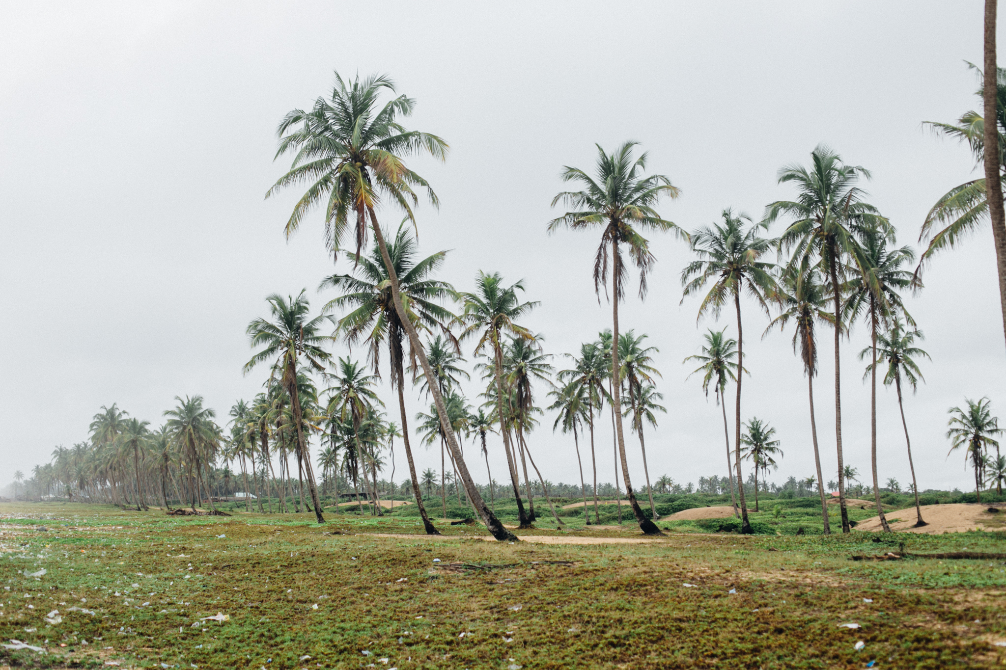 Coconut Trees, Badagry Beach