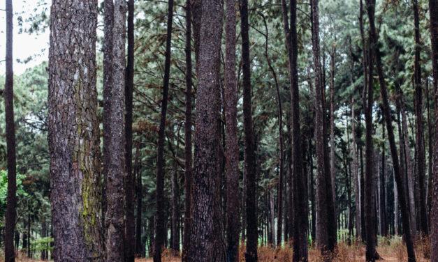 Travel Destination: Ngwo Pine Forest & Cave, Enugu