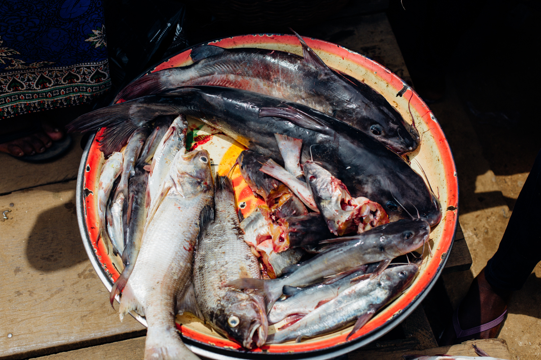 Cat fish at the market in Koko