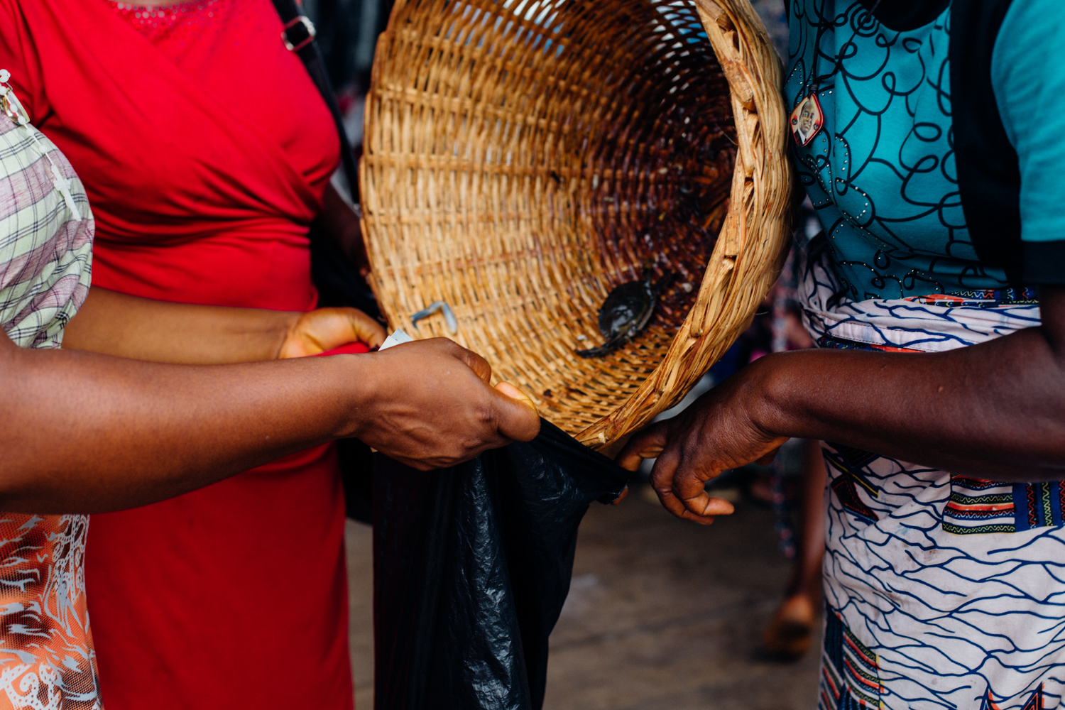 Crabs being dropped into a bag at the floating market in Koko