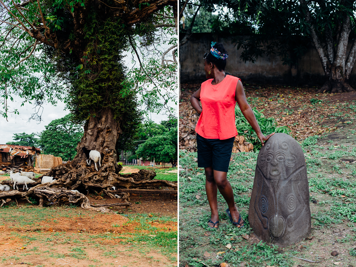 Allegedly the Oldest Tree in West Africa, Alok-Ikom